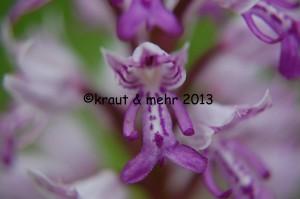 Nahaufnahme Orchideenblüte